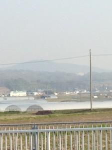 いちじく畝作り2014 (3) (768x1024)